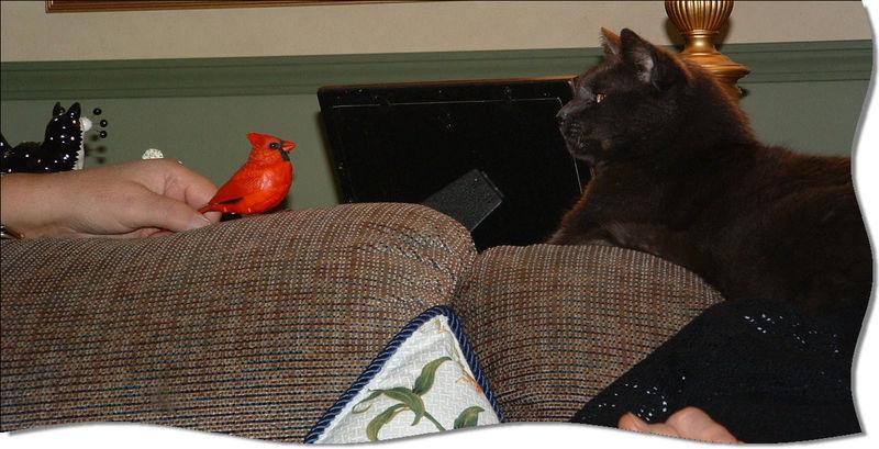 Thomas and bird1
