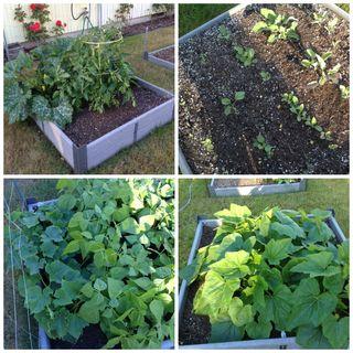2014 Garden Collage
